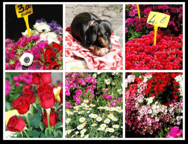 Campo de Fiori: las flores