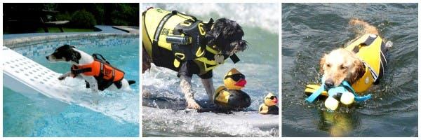 Rampa y chalecos salvavidas para perros