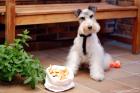 Galletas para perros crujientes y saladas. Crackers
