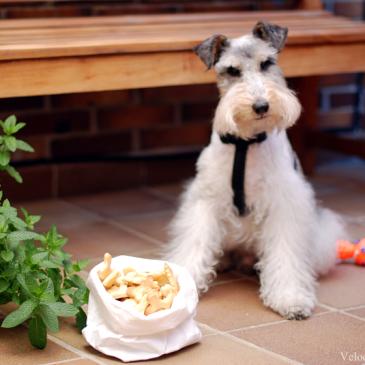 Galletas crakers para perros