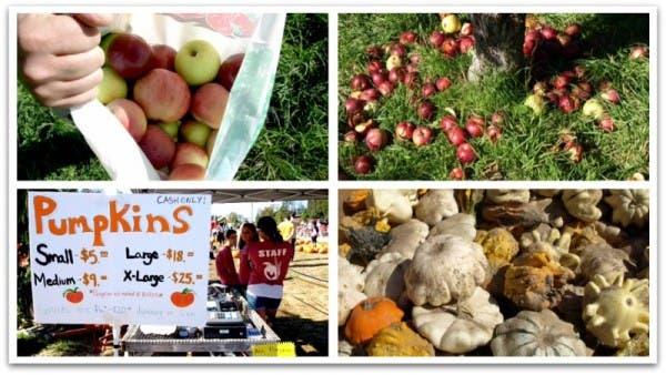 Recogida de manzanas y calabazas en Estados Unidos
