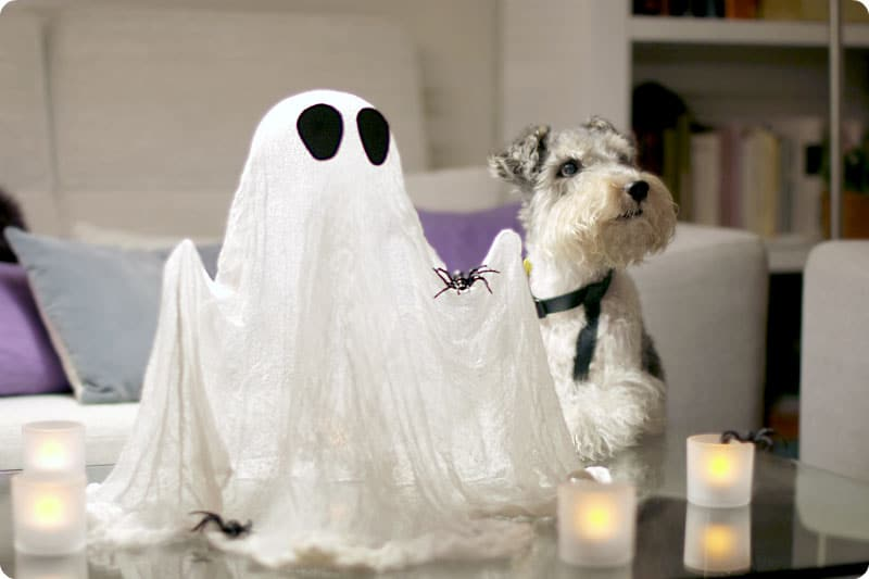 Willy y su fantasma de gasa transparente para Halloween