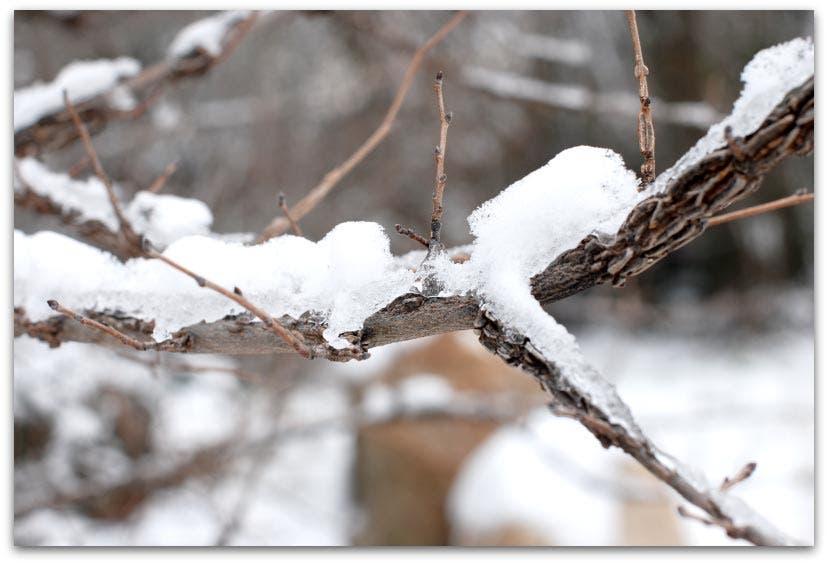 Ramas con hielo