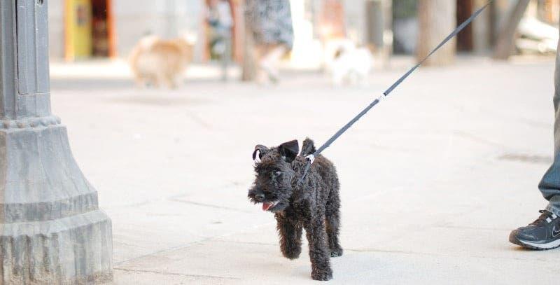 Camilo caminado por Madrid